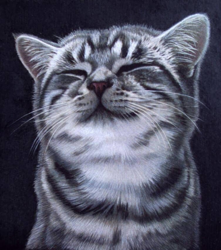 Dipingere gatti   Gionata Alfieri   Illustratore Naturalistico e Botanico